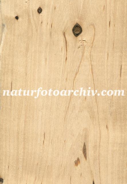Holz Birke birke